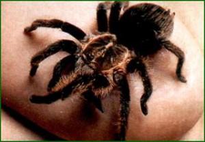 паук на руке - примета