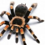 Популярные приметы о пауках