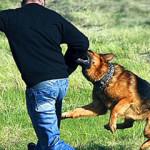 Собака нападает и кусает во сне — к чему это