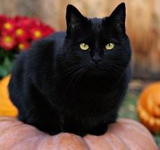 проверить порчу с помощью черной кошки