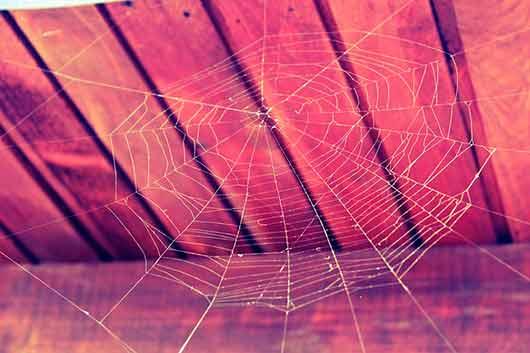 К чему снятся пауки: черный, белый, большие и маленькие