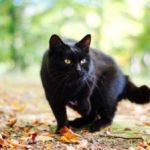 К чему снятся кошки и котята женщине