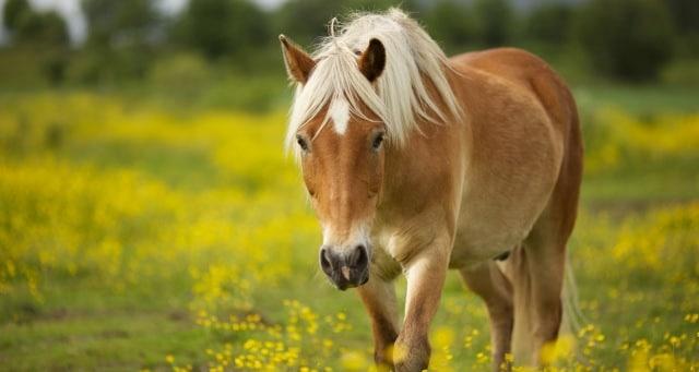 Сонник: к чему снится видеть во сне лошадь