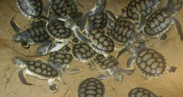 Сонник: к чему снится черепаха женщине